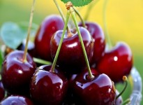 Study of the effect of CONCERVOL coating on the postharvest life of cherries