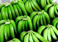 New treatment extends shelf life of bananas