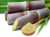 Các loại enzyme phổ biến trong ngành công nghiệp thực phẩm