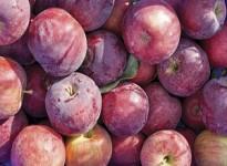 Hỏi & Đáp về Chất bảo quản trái cây