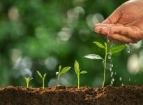 Tại sao lại nên dùng phân hữu cơ vi sinh dạng lỏng ?