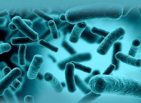 Cách lựa chọn phụ gia chống khuẩn trong sản xuất sơn